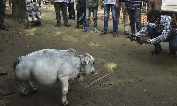 বিদেশি গণমাধ্যমে 'রাণী'র খবর: লকডাউনেও দেখতে ভিড়